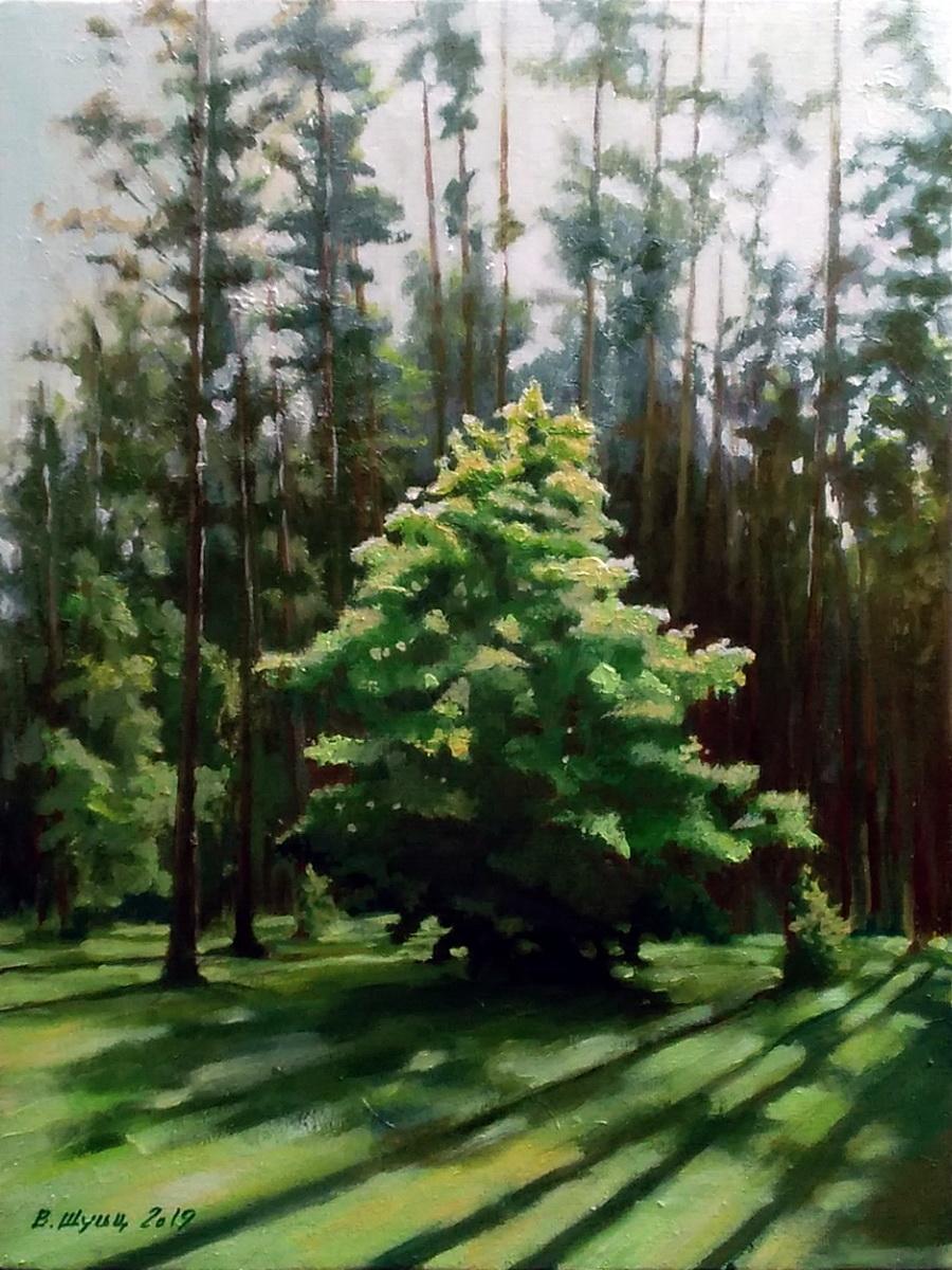 Деревце на опушке леса. Вид 1
